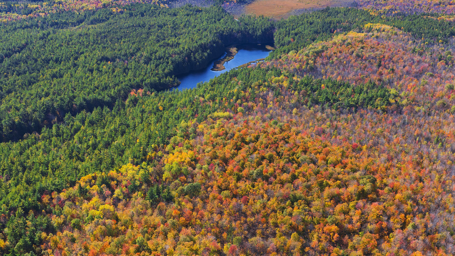 fall forest lake wide